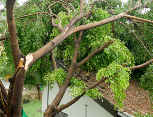 That Tree By Your Roof – Is It Dangerously Unstable?