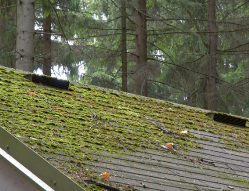 Learn The Top Ways To Get Rid Of Roof Moss!